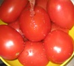 Tomato photos cropped