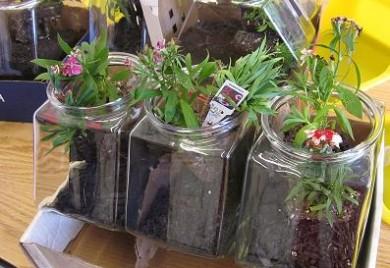 Terrarium Gardening Nutrition Know How
