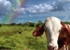 Is Grass-fed beef better?