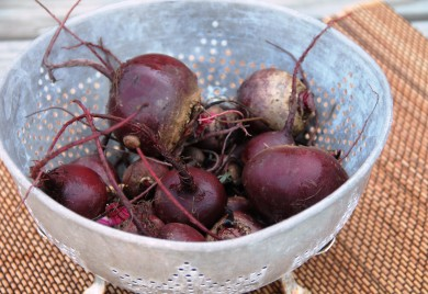 Garden Fresh Beets Give Them A Try Nutrition Know How